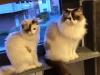 WENDY KITTY CAT E TONY MONTANA di Emanuela
