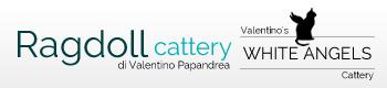 banner-allevamento-ragdoll-white-angels-cattery